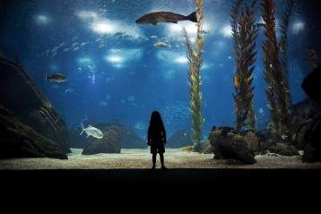 The girl who loved the Oceanario by Pedro Moura Pinheiro